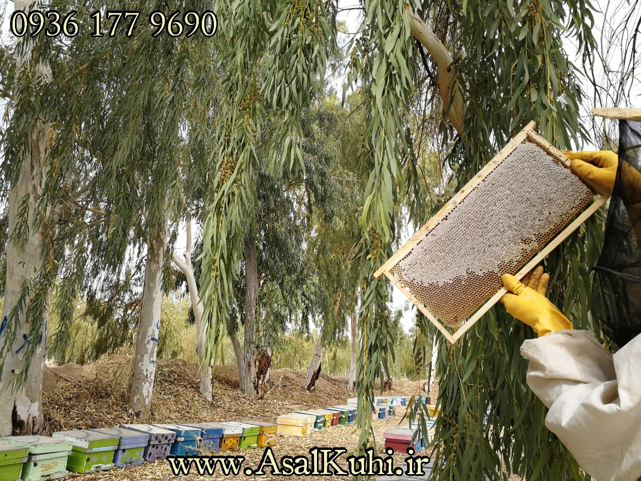 خواص درمانی عسل اکالیپتوس