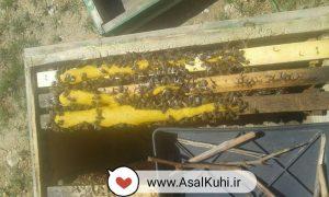 کیک گرده زنبور عسل