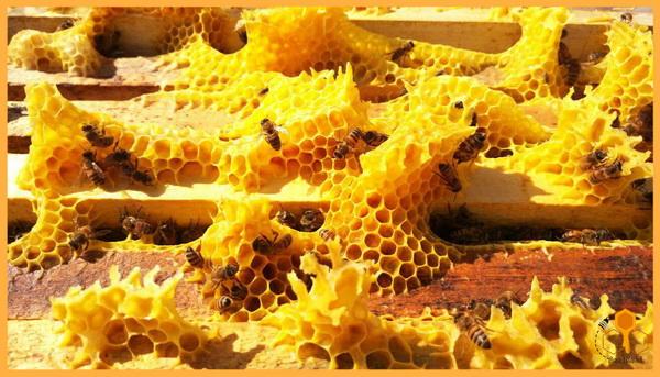 فروش عسل زعفران