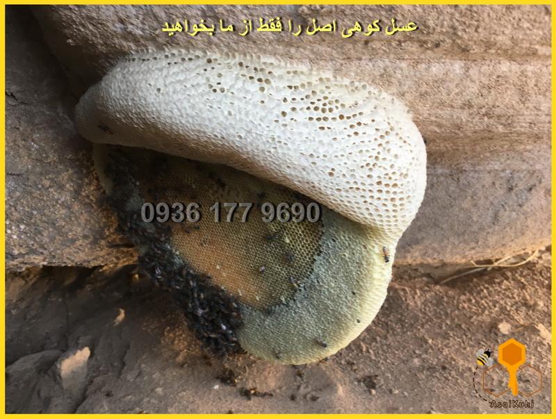 عکس عسل طبیعی کوهی
