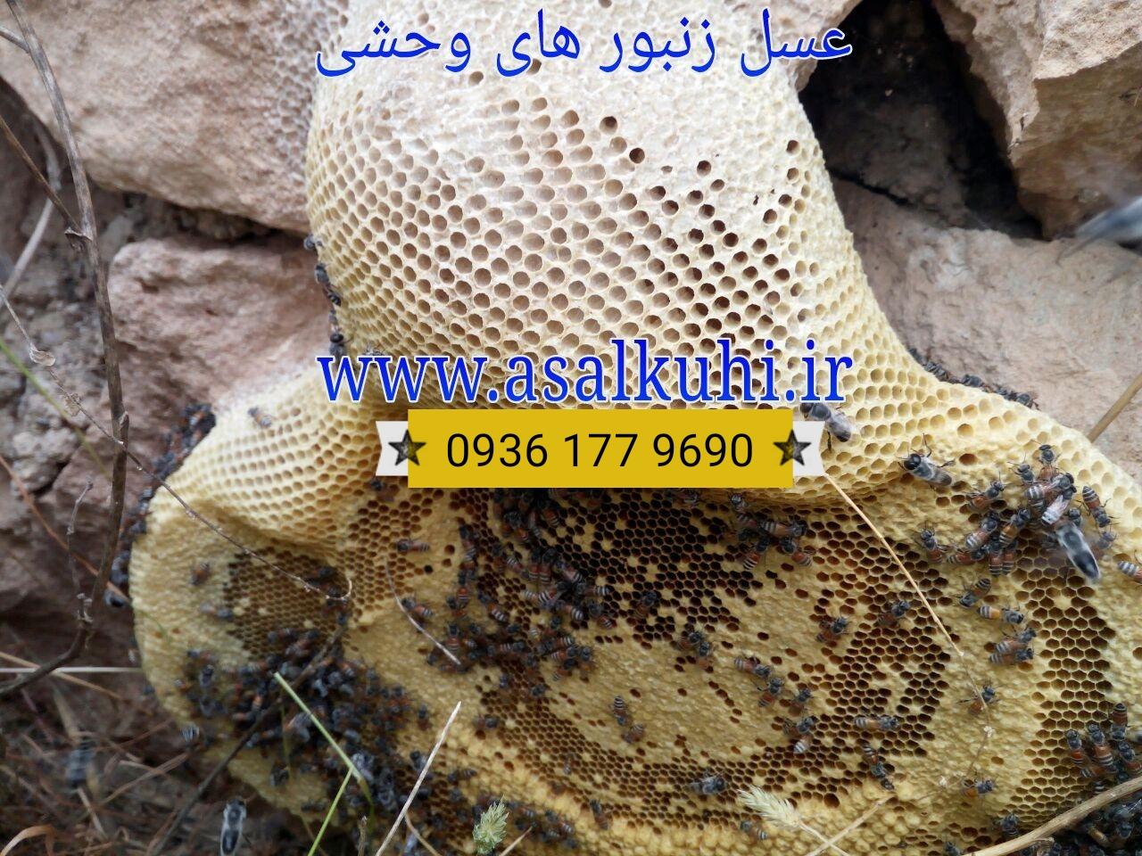 خرید عسل کوهی طبیعی